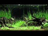 Aquascaping - Aquarium Ideas from The Art of the Planted Aquarium