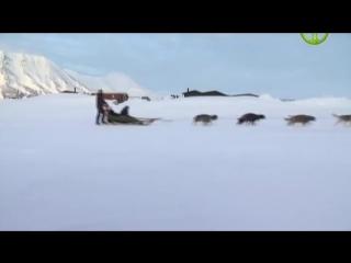Шпицберген. Край острых гор. документальное видео. кино онлайн. Человек мира