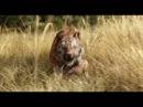 Книга джунглей - Русский трейлер (2) 2016 HD