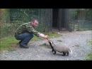 Кормление хищных зверей в Приморском Сафари парке