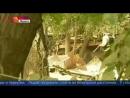 в Тбилиси застрелен убивший человека тигр-альбинос