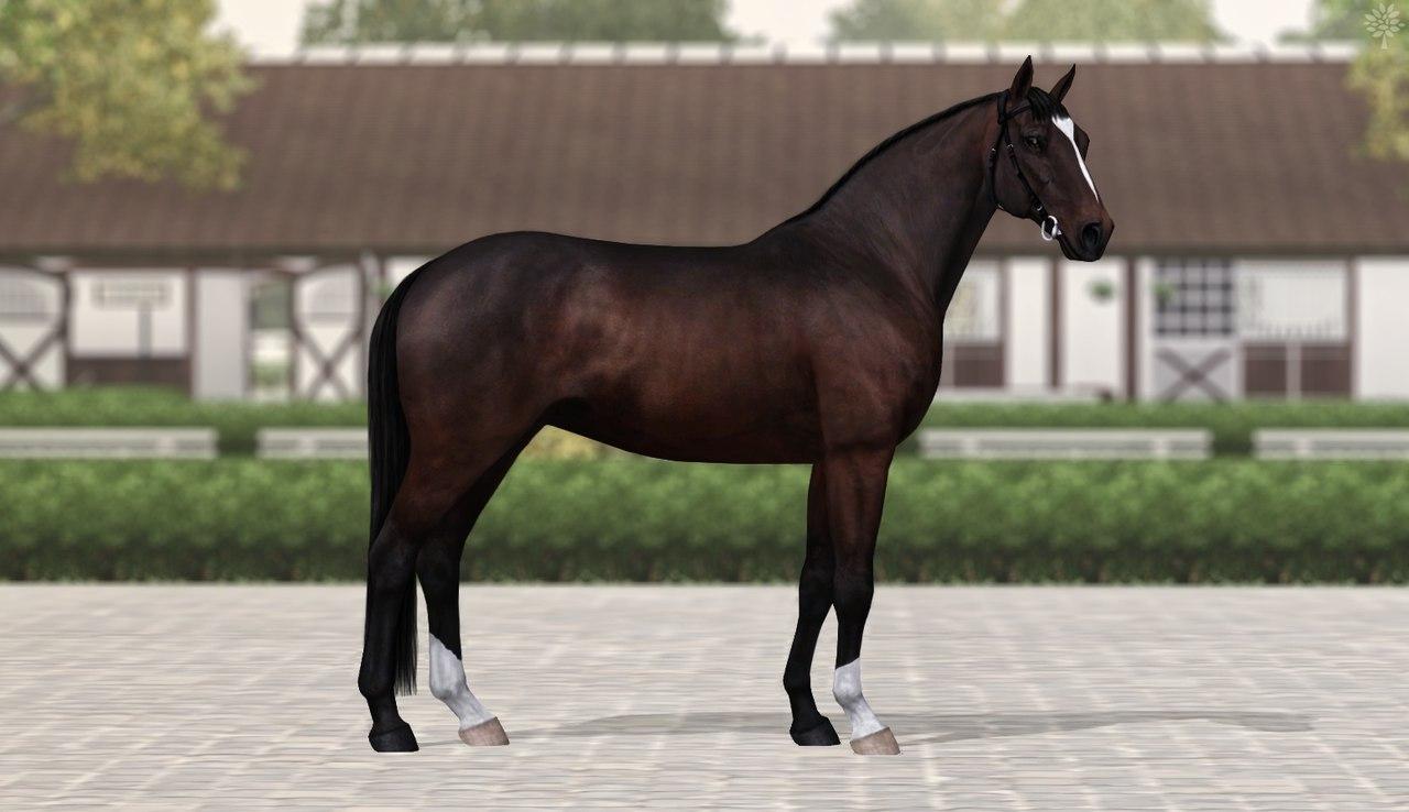 Регистрация лошадей в RHF 2 - Страница 37 6drjhydCkxk