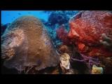 Тайны подводного мира (Deep Sea, 2006)