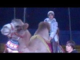 Цирк Шапито