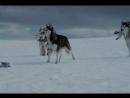 Энигма - Белый плен(вот где преданность любимой)
