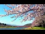 Music by KARUNESH - Japanese Spring
