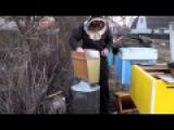 Термообработка пчел.Весна 2015.