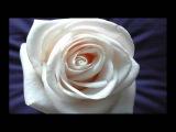 Вечная красота розы. Франсис Гойя.