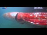Toyama to wander to giant squid Piers
