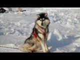 Арктика, природа Арктики, видео про Арктику