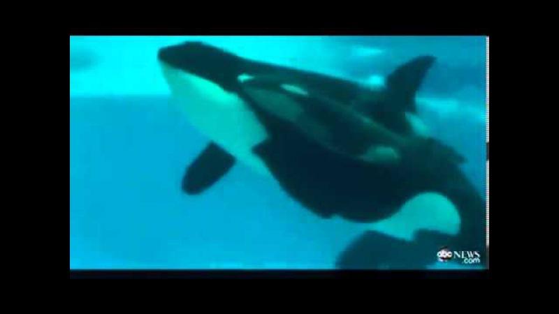 Самка Кита родила в океанариуме