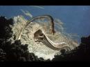 Морские динозавры Документальные фильмы National Geographic Channel TV