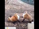 When ur friend tells a funny joke ??™miles foxglove