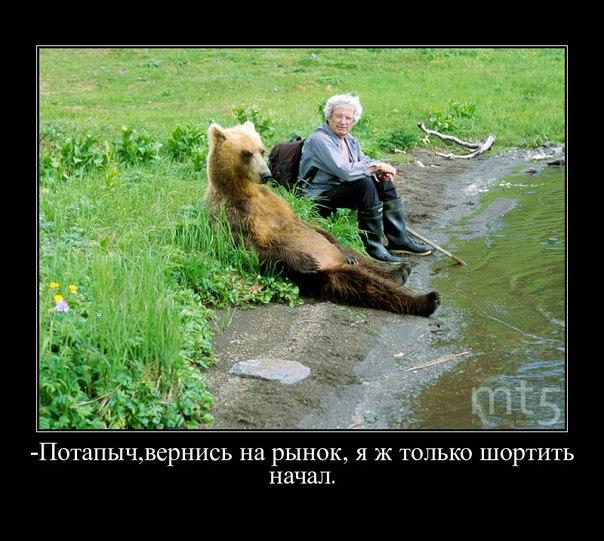 Надежда медведей