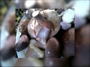 Народный репортер: В лесах Ярославской области вновь пошли грибы