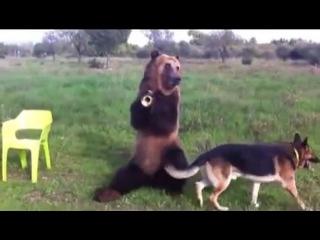 Медведь Дима покорил YouTube и взорвал весь интернет !