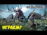Играем в The Witcher 3: Wild Hunt - Лесное чудище!