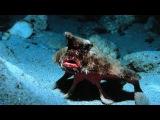 10 необычных морских обитателей, о которых вы не знали