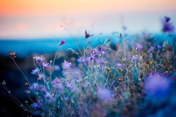Потрясающие краски Крыма