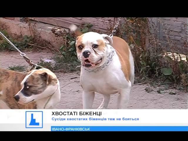 В Івано-Франківську афганець прихистив собак із зони АТО