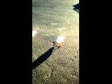 Чайка танцует за еду  - A gull dances for food