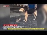 Кадыров опубликовал видео со слепым котенком, о котором заботится пес