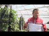 Выращивание клубники на гидропонике с MaxiMarin