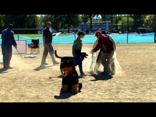 You have to SEE This. Level 3 PSA Obedience..