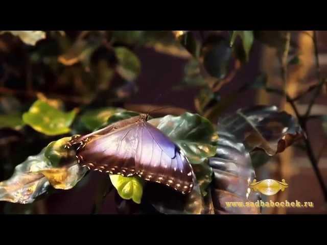Сад Живых Бабочек Миндо