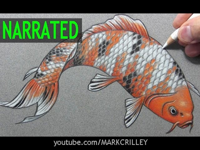 How to Draw a Fish (Koi): Narrated Step-by-Step