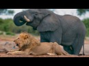 Интересный фильм Живая энциклопедия Африки Слоны львы гепарды леопарды
