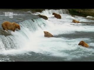 Дикая (Суровая) Арктика 1 часть
