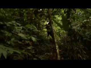 Discovery: В поисках сокровищ: змеиный остров / 05
