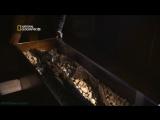 «Десять казней египетских (2). Последние бедствия» (Документальный, 2008)