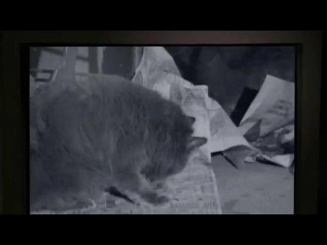 Клип драного кота! Эпизод 17