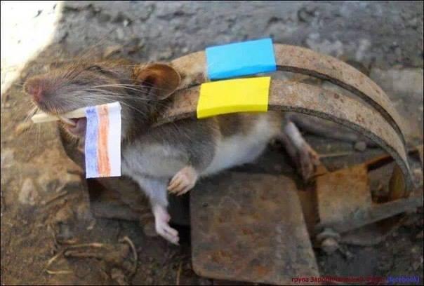 Климкин - Лаврову: миру угрожают не только террористы ИГИЛ, но и российские марионетки на Донбассе - Цензор.НЕТ 3415