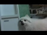 Hotline Miami 2 Wrong Dog