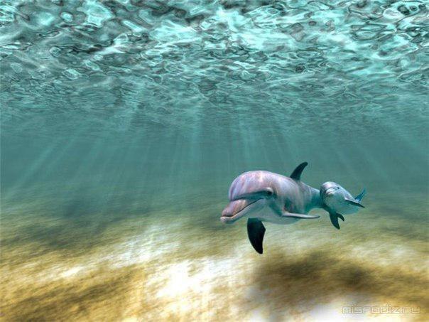 кому нравятся дельфины? всё о них в комметы=) анон