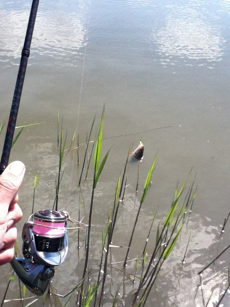 прогноз клева рыбы на реке мертвый донец
