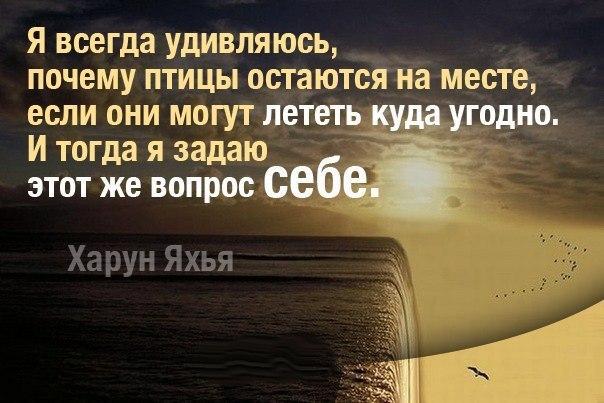 http://cs540100.vk.me/c629422/v629422912/2a8ff/MiouUcCccfE.jpg