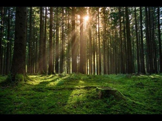 У Гомлі на месцы расстрэлаў высякаюць лес Будзе будоўля