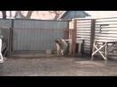 Собака танцует под Modern Talking - Dog dances to Modern Talking