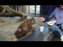 Monkey Sees A Magic Trick/реакция обезьяны на фокус