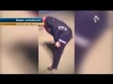 Тигрица едва не разорвала мужчина из-за пьяного дрессировщика (видео)