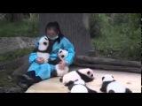 Обнимать панд — лучшая работа на свете! Лучше только ничего не делать :) Прикол