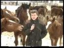 Опасные лошадки (Животные, политика, интервью, кошки, ведущий собаки, секс, порно, sex,  эротика, инцест, мамка, зоофил, дурак)
