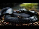Топ 7 самых ядовитых змей в мире. Опасные змеи