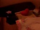как петшопы ложатся спать!