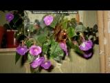 Мои комнатные цветы. под музыку Классическая китайская музыка - Вечность (скрипка, эрху, флейта). Picrolla