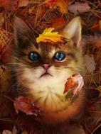 Осенний приветик !!!